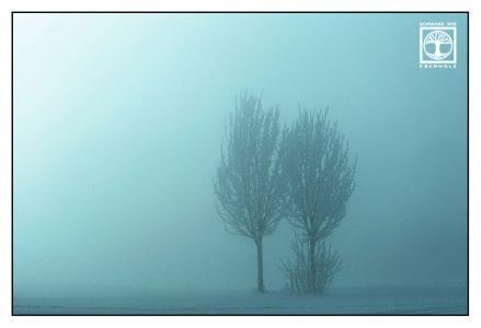 blau, türkis, Bäume Nebel, Bäume Winter, Bäume Schnee