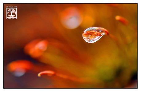 moss macro, droplet macro