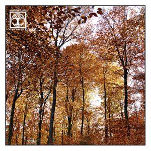autumn trees autumn forest, orange trees