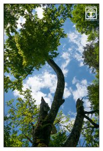 tree summer, treetop, forest, forest summer