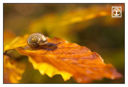 snail, snail autumn, cute snail
