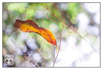 autumn leaf, orange leaf