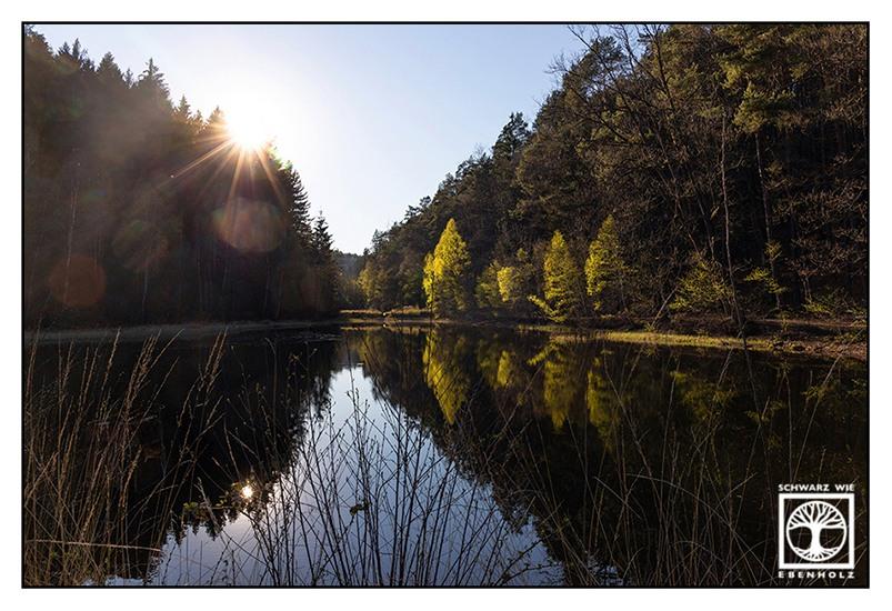 Gelterswoog, lake spring, forest spring, reflections lake