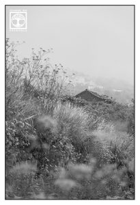 flower garden, flower meadow, hut black and white, la palma, countryside black and white, rural landscape