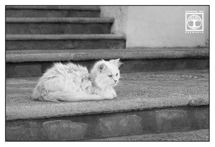 Katze Treppe, flauschige katze
