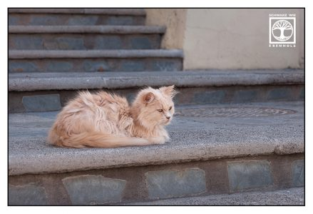 cat stairs, red cat