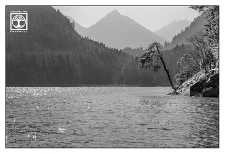 black and white lake, black and white tree, königssee, bavaria, germany