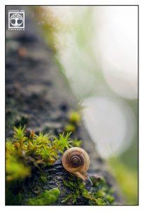 tiny snail, cute snail, snail, macro world