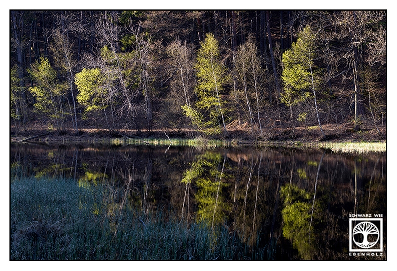 Gelterswoog, lake spring, forest spring