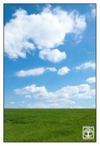 green meadow, green grass, spring meadow