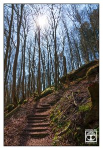 Karlstal, Palatinate Forest, forest spring, forest stairs