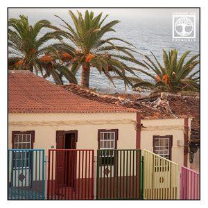 San Andres, palms, La Palma