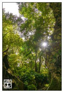laurel forest, gorge, forest, summer forest, los tilos, la palma