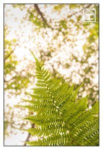 fern leaf, green leaf, la galga