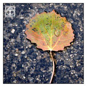 autumn leaf, autumn leaves, autumn, fall