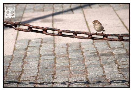 sparrow, cute bird