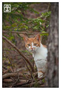 cute cat, kitten, cat forest, kitten forest, red cat