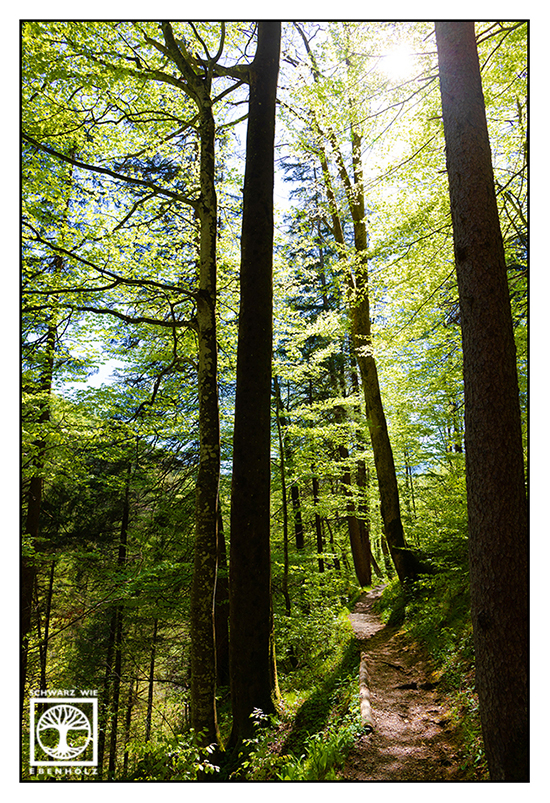 forest, forest track, forest in spring, forest path