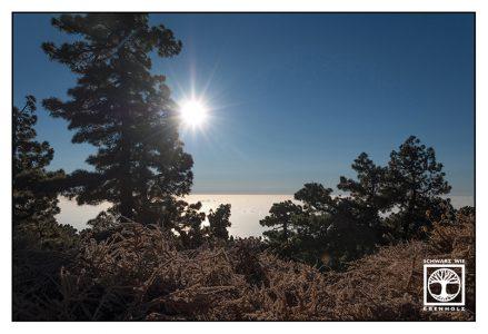 la palma, roque de los muchachos, caldera de taburiente, caldera, pine forest