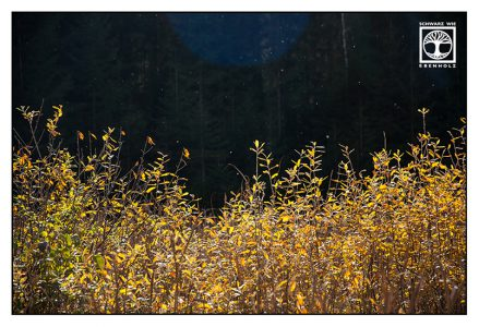 yellow leaves, autumn leaves, backlight leaves
