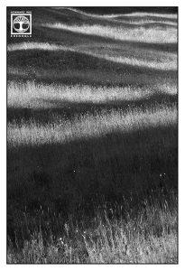 abstrakte fotografie, punkt linie fläche fotografie, linien fotografie, wiese schwarzweiss