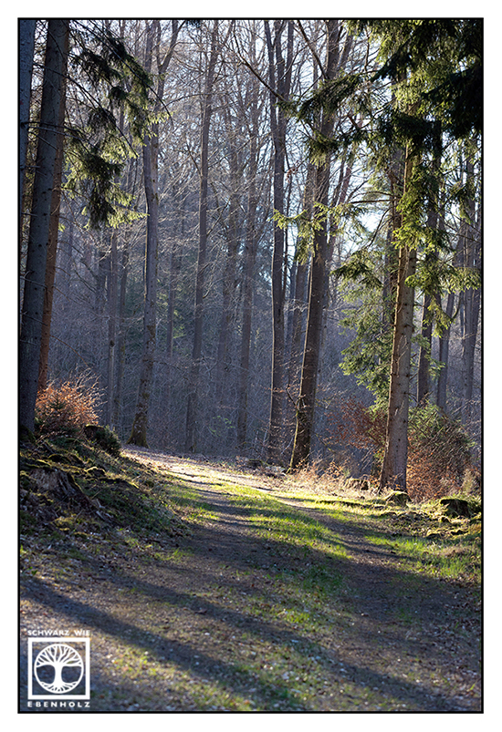 forest, forest track, forest in spring
