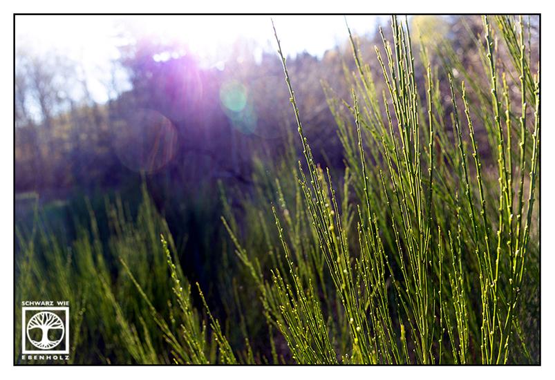 backlight grass, backlight fern