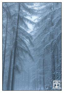Wald Winter, Pfälzer Wald Winter, Bäume Schnee, Bäume Winter, Nebel Winter, nebel winter wald