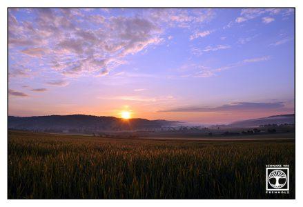 sunrise field, sunrise cornfield, Baden-Württemberg, Germany