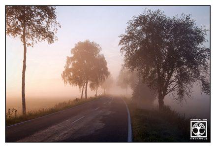 foggy road, country road, sunrise road, Allgäu, Bavaria, Germany