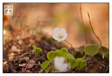 white flower, spring flowers, white flowers
