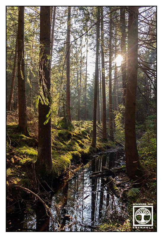 forest, woods, forest light, moor, moss, marsh, beck forest