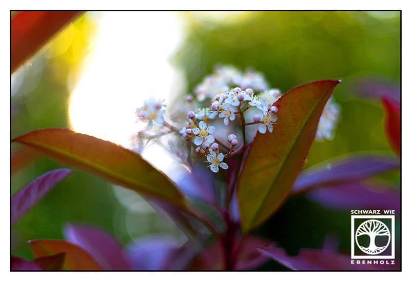 white flowers, white flower, spring, springtime