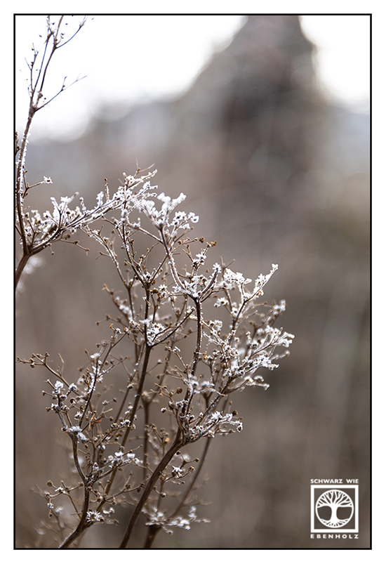 frost, hoar, frozen branches