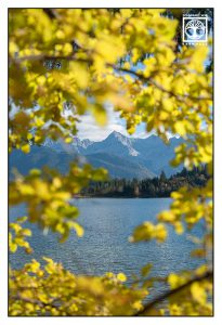 yellow tree, yellow leaves, autumn leaves, autumn lake, mountain lake, mountain lake autumn, Barmsee, Lake Barm, Bavaria, Germany