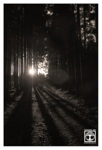 black and white forest, dark forest