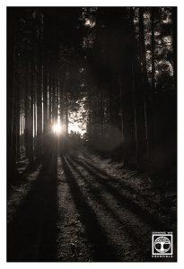 abstrakte fotografie, punkt linie fläche fotografie, linien fotografie, Wald schwarzweiss
