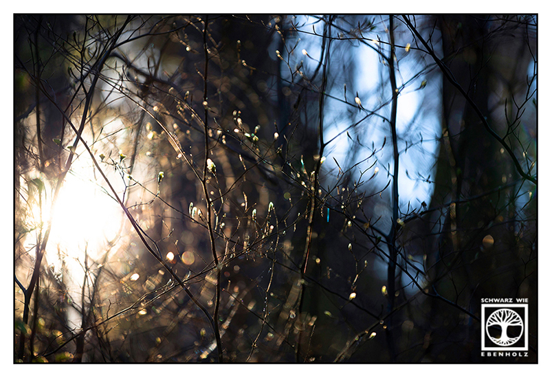 backlight branches, backlight trees, backlight forest