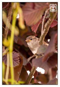 bird, sparrow