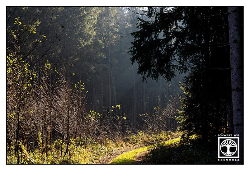 forest, woods, mossy trees, trees moss, moss light, trees light