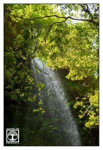 La Palma, waterfall, waterfall forest, los tilos