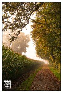 autumn walk, autumn way, autumn forest, foggy autumn, fog autumn