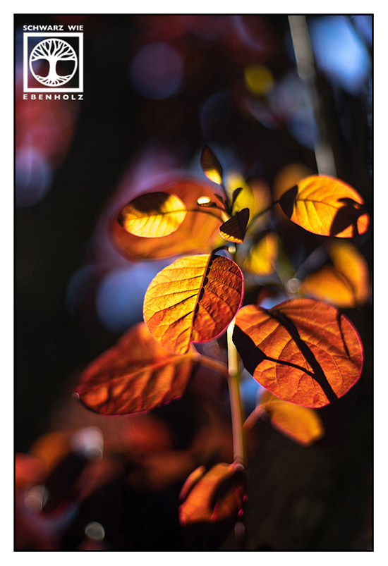 autumn, fall, red leaves, autumn leaves