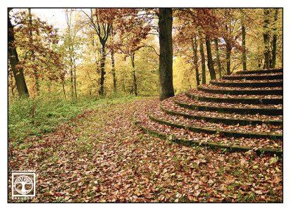 autumn stairs, autumn forest