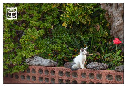 kitten, cute cat, la palma