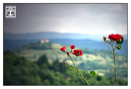 romance, roses landscape, Baden-Württemberg, germany, red rose, red roses