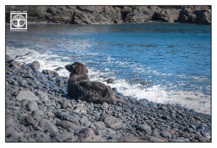 black dog, dog at the sea