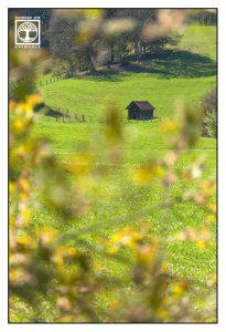 rural landscape countryside, spring field, green hills, bavaria, germany, kochel