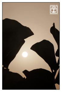 abstract photo, abstract photography, tree silhouettes photography