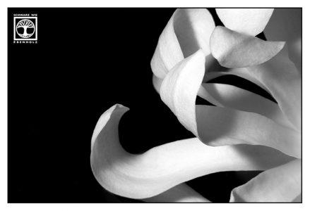 blume makro, magnolie, weiße blume, Blütenblätter, lowkey blume